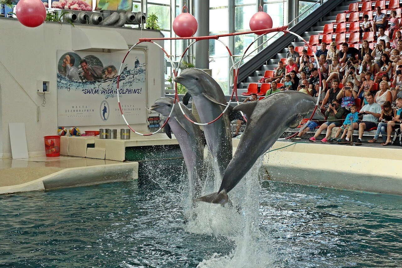 Dolphins jumping out from the pool in the Varna dolphinarium